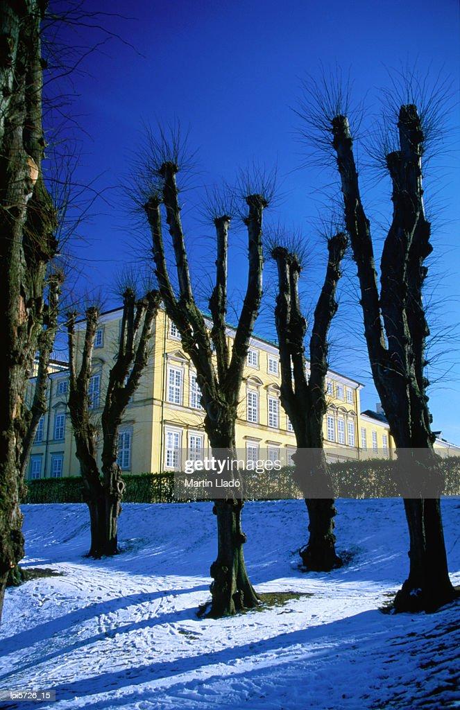 Trees in winter in Frederiksberg Have, Copenhagen, Denmark, Europe : Stock Photo