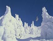 Trees in winter, Yamagata Prefecture, Honshu, Japan