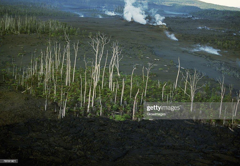 Trees killed by lava flows, Hawaii : Stock Photo