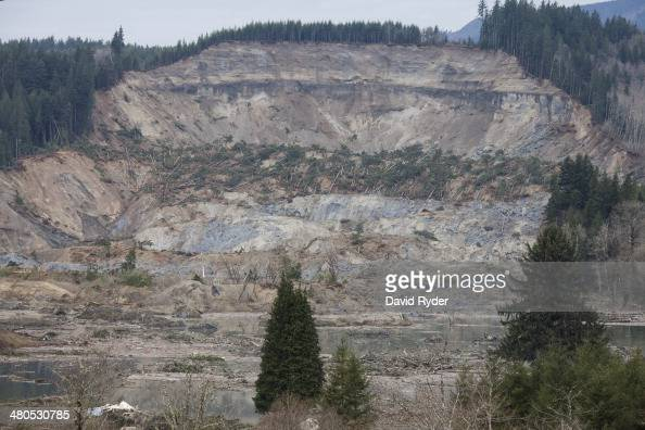 Trees lay on a hillside in the aftermath of a mudslide and related flooding on March 25 2014 in Oso Washington A massive mudslide on March 22 has...