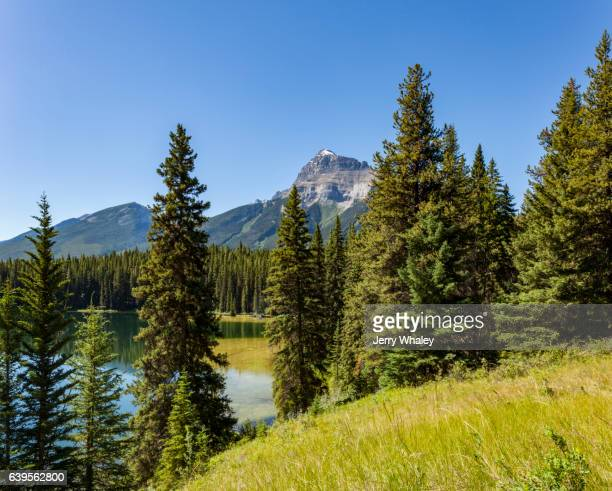 Trees & Meadow at Pilot Pond, Bow Valley, Banff NP