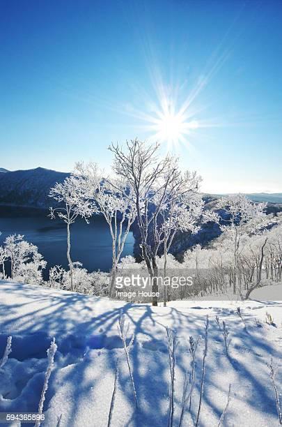 Trees Near Lake Mashu In Winter