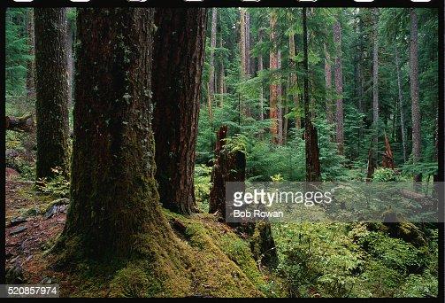 Trees near Sol Duc Falls