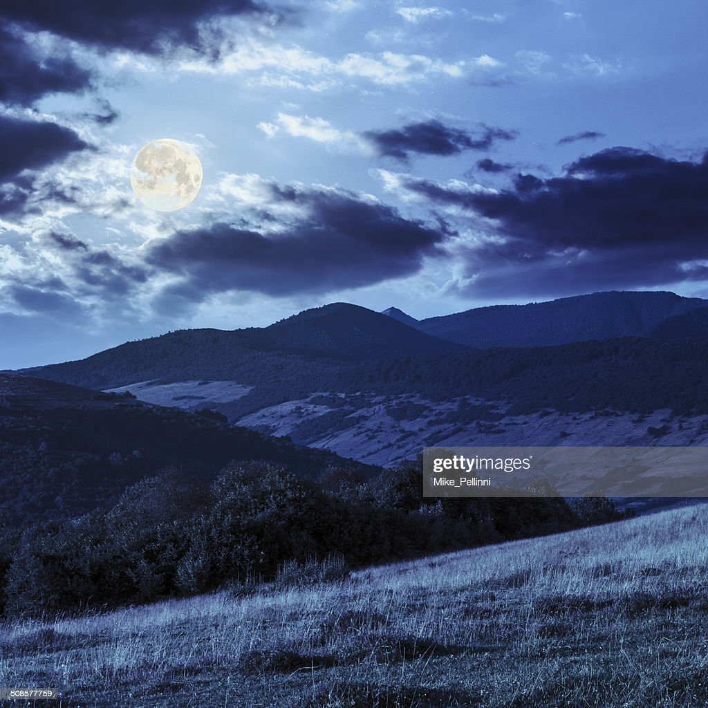 trees near valley on mountains  hillside in moon light : Bildbanksbilder