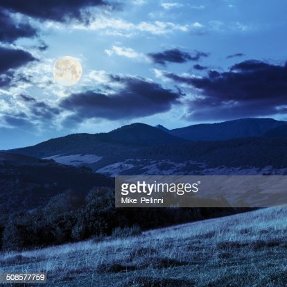 trees near valley on mountains  hillside in moon light : Stock Photo