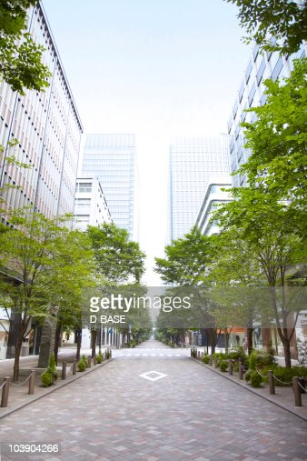 Trees of street lined with office buildings. : Stock Photo