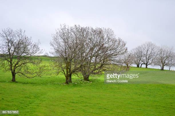 Trees on a hill in spring