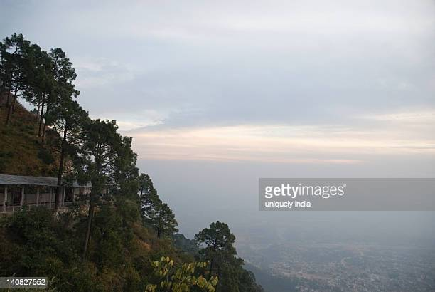 Trees on a hill, Vaishno Devi, Katra, Jammu And Kashmir, India
