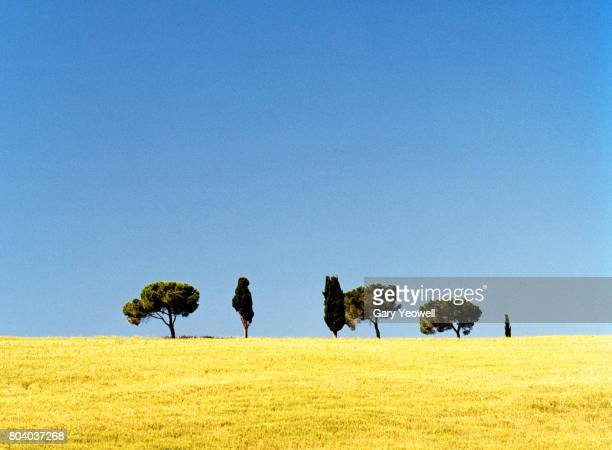 Trees on a hillside in Tuscany