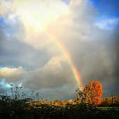 Trees On Field Against Rainbow In Cloudy Sky