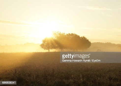 Trees On Field Against Sky During Sunrise