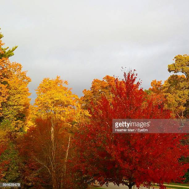 Trees On Field During Autumn Against Sky