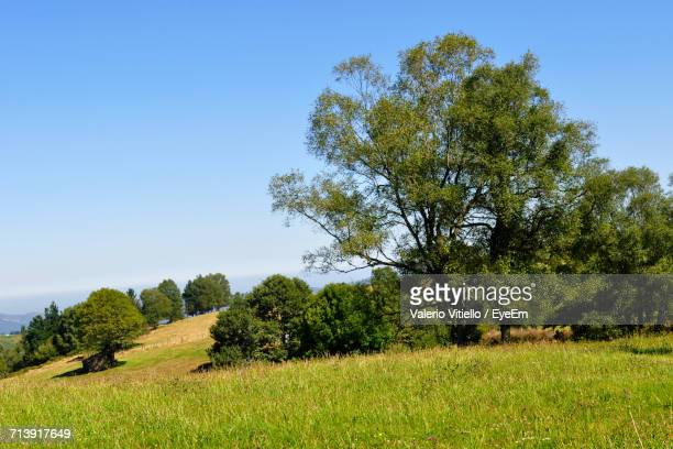 Trees On Grassy Field Against Clear Blue Sky