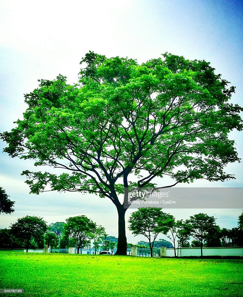 Trees On Grassy Field Against Sky In Park