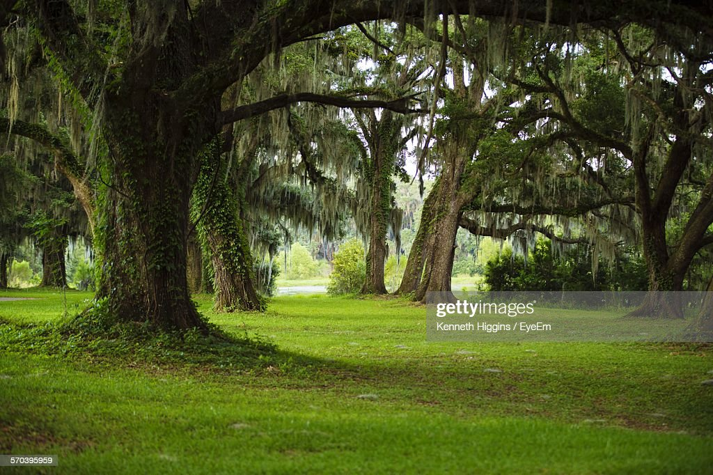 Trees On Grassy Field In Forest