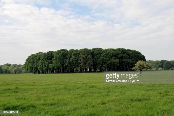 Trees On Grassy Field