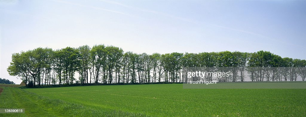 Trees on green field, Hesse, Germany : Stock Photo