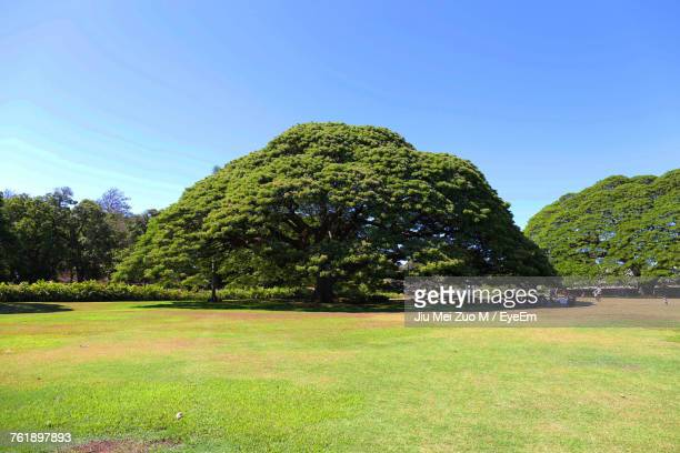 Trees On Landscape Against Clear Blue Sky