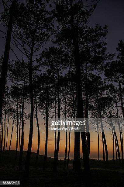 Trees On Landscape At Sunset
