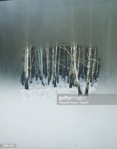 Trees On Snow Covered Field Seen Through Condensed Window During Winter