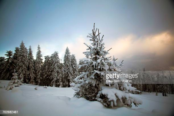Trees On Snow Covered Landscape