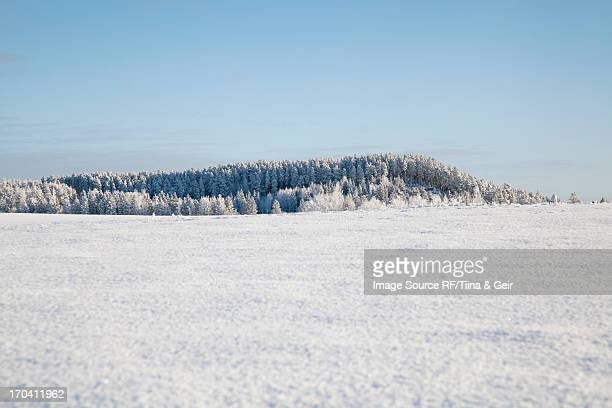 Trees on snowy rural mountain