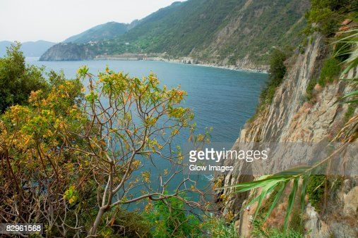 Trees on the coast, Italian Riviera, Cinque Terre National Park, Italy