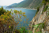 Trees on the coast, Italian Riviera, Cinque Terre National Park, Italy