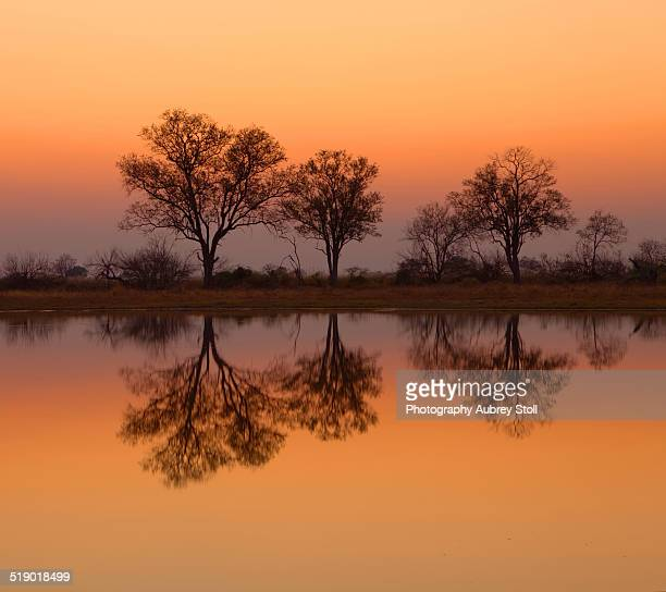 Trees on the Okavango Delta