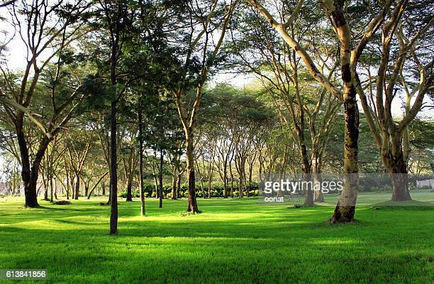 Trees on the shore of Lake Naivasha, Kenya