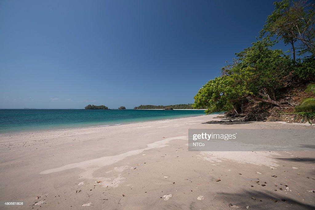Trees on tropical beach : Stock Photo