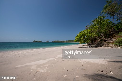 Trees on tropical beach : Stock Photo