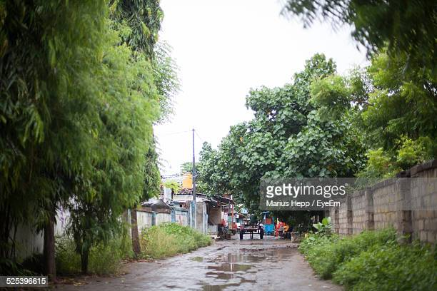 Trees Over Wet Street In Village