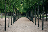 Trees planted neatly in straight rows