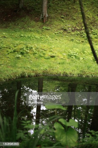 trees reflected in a puddle in the forest : Stock Photo