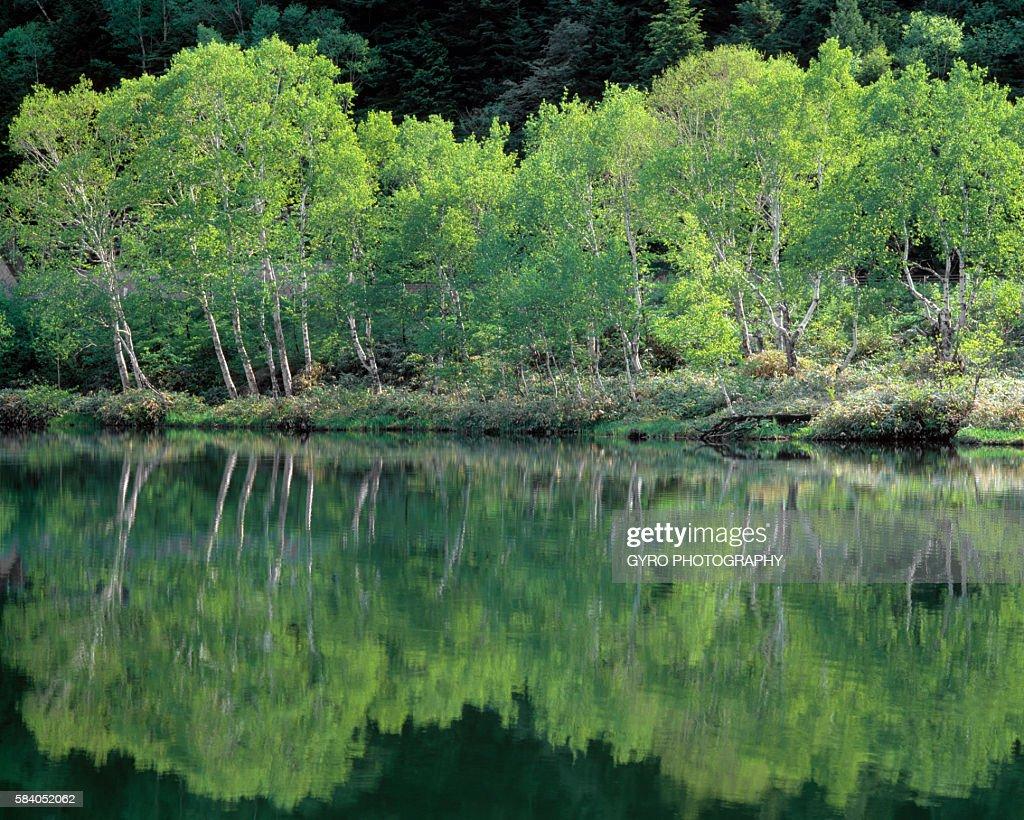 Trees reflected in Kido Pond, Shiga Plateau, Yamanouchi, Nagano Prefecture, Japan