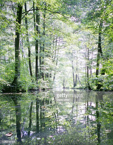 Trees reflected in water. tree, reflect, water, Spreewald, Germany, NE of Berlin, green