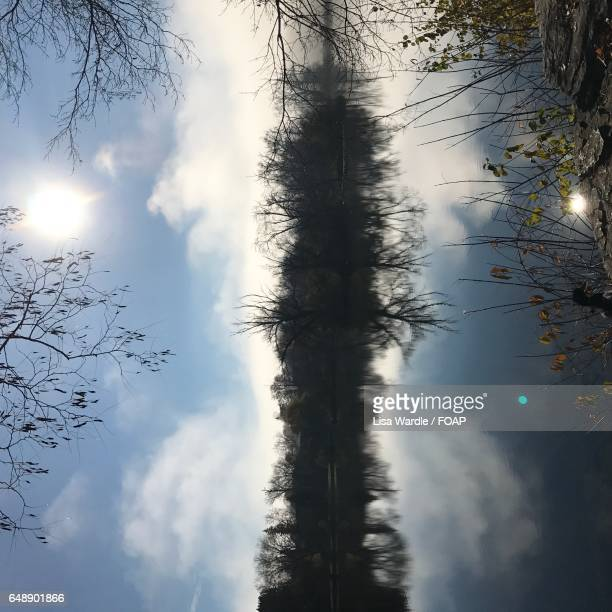 Trees reflected on the water