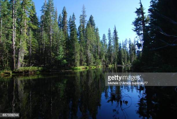 Trees reflecting in the Merced River