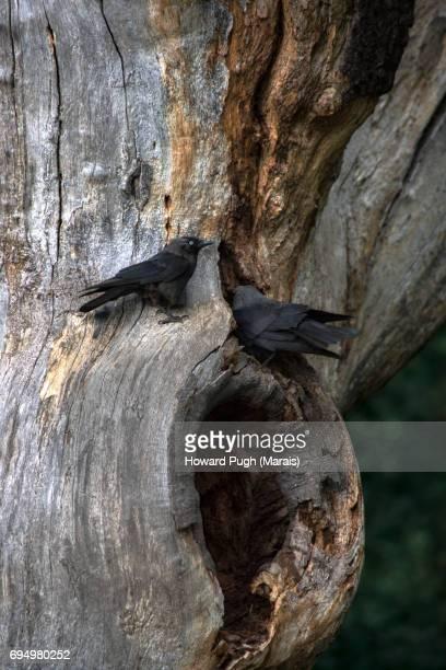 Trees: Richmond Wood