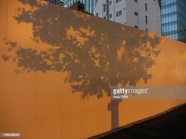 Trees shadow