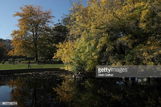 Trees show their fall foliage in Burggarten park on October 16 2017 in Vienna Austria Vienna is among Europe's most popular tourist destinations
