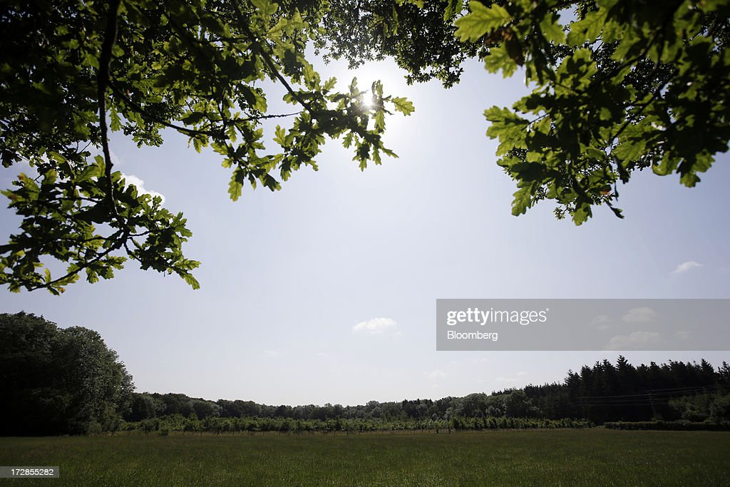 Trees sit on the horizon close to the area set to be explored for shale gas by Celtique Energie Ltd., in Fernhurst, West Sussex, U.K., on Friday, July, 5, 2013. Two areas of Surrey and Sussex hold 700 million barrels of recoverable shale oil, or more than a year's supply for Britain, the U.S. Energy Information Administration estimates. Photographer: Matthew Lloyd/Bloomberg via Getty Images