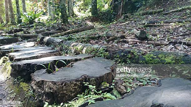 Trees Stumps In Forest
