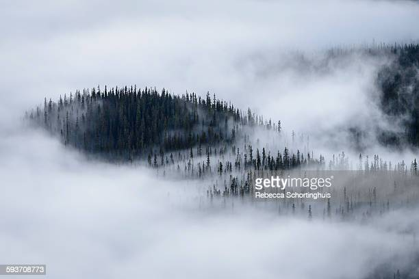 Trees surrounded by low cloud and fog