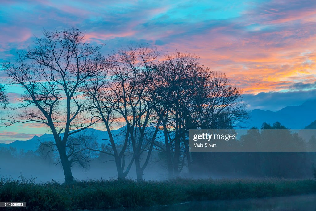 Trees with colorful sky