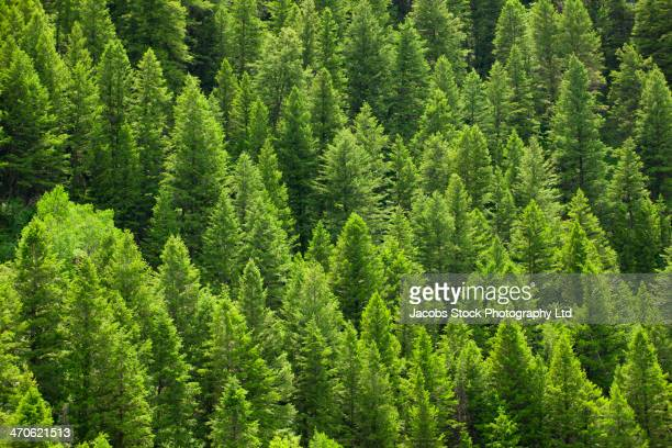 Treetops on hillside