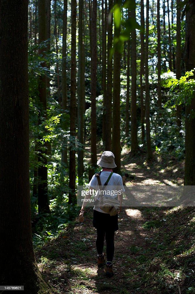Trekking : Stock Photo