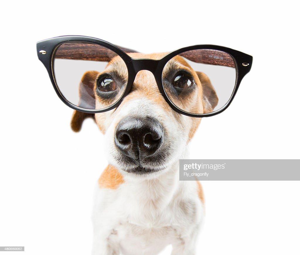 Moderno de mascotas : Foto de stock