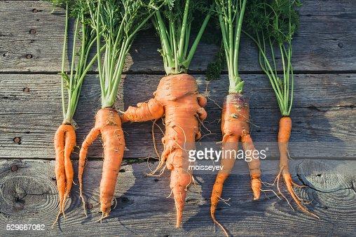 Trendy ugly organic  carrot : Stock Photo